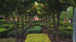 Marrákeš, Maroko, záhrada