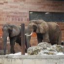 slon, zoo bojnice