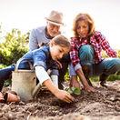 záhrada, pestovanie, sadenie