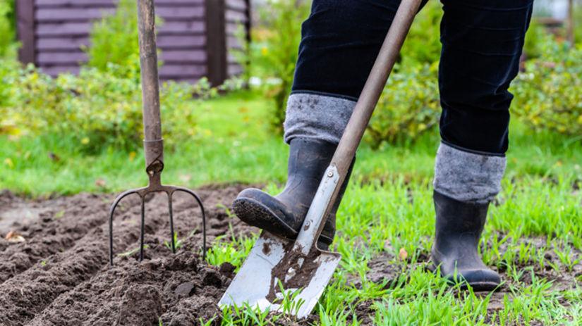 záhrada, rýľ, záhradkár, sadenie