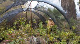 Izrael, botanická záhrada