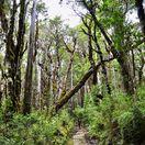prales, čile