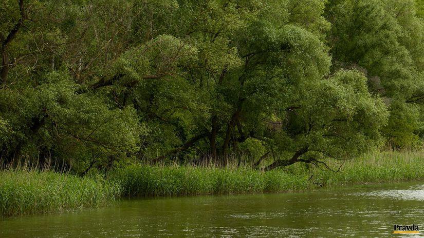 dunaj, lužné lesy