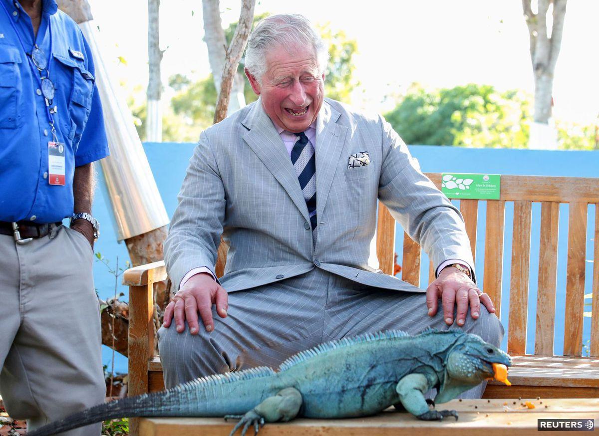 Princ Charles, leguán, Kajmanie ostrovy