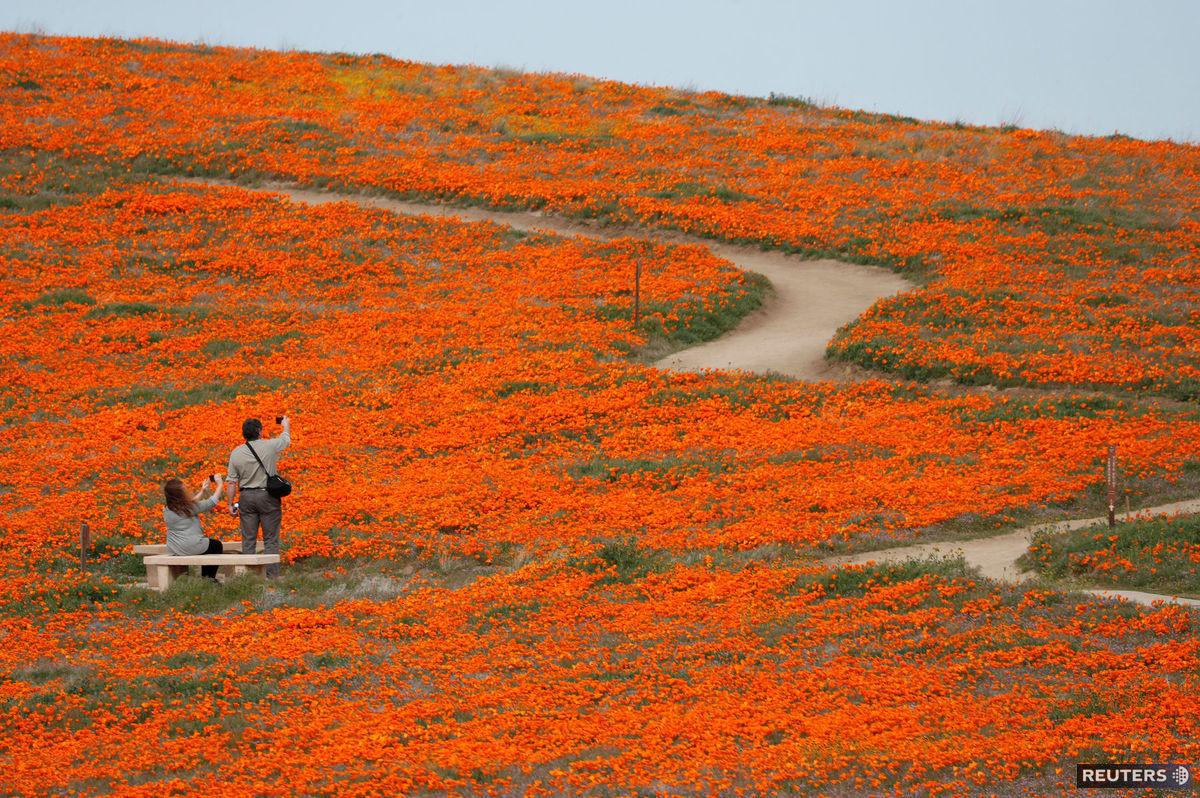 kvety, Kalifornia, kvitnutie, jar