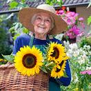 slnečnica, seniori, dôchodca, záhrada