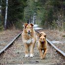 psy, psi, pes, koľajnice, vlak, koľaje, zvieratá