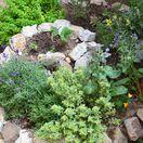 záhrada, bylinky
