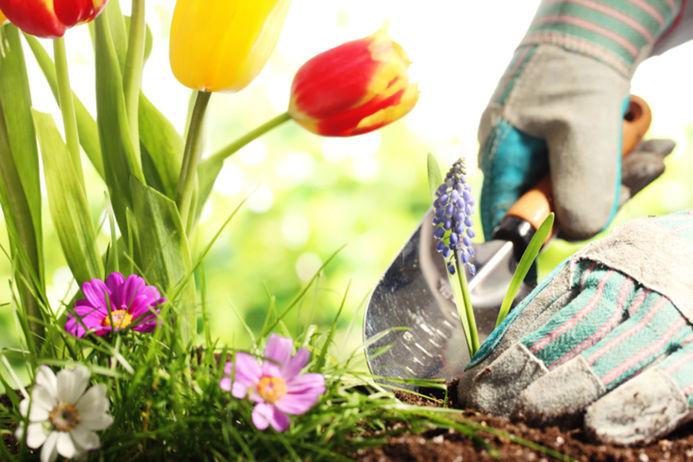 Čo urobiť v záhrade v máji