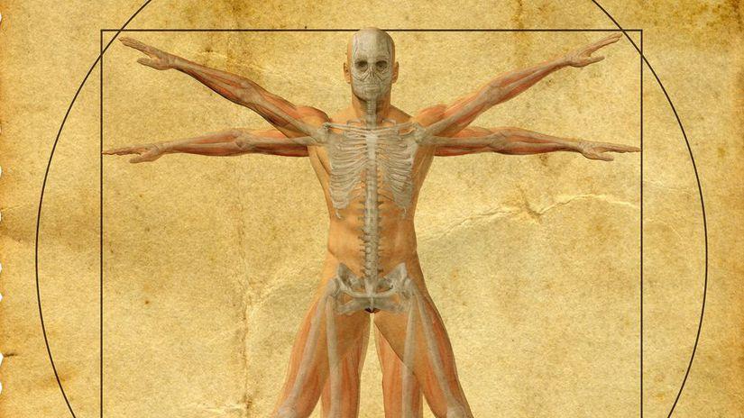 človek, telo