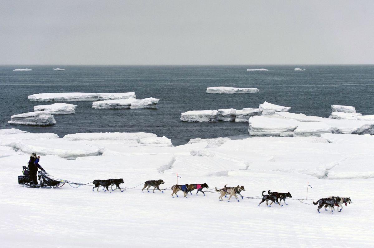 Beringovo more, psí záprah,sneh, zima, sane
