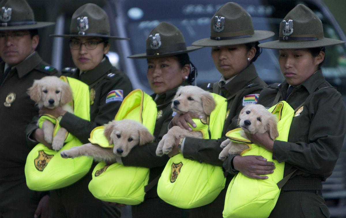 Bolívia, psy, psi, šteniatka, polícia