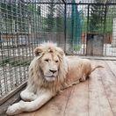 Levov sa v Liptove neboja, ľudí poriadne hnevá niečo celkom iné