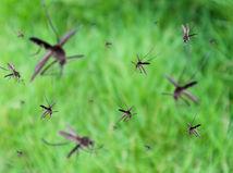 komáre, komár