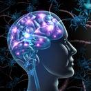 skleroza, mozog