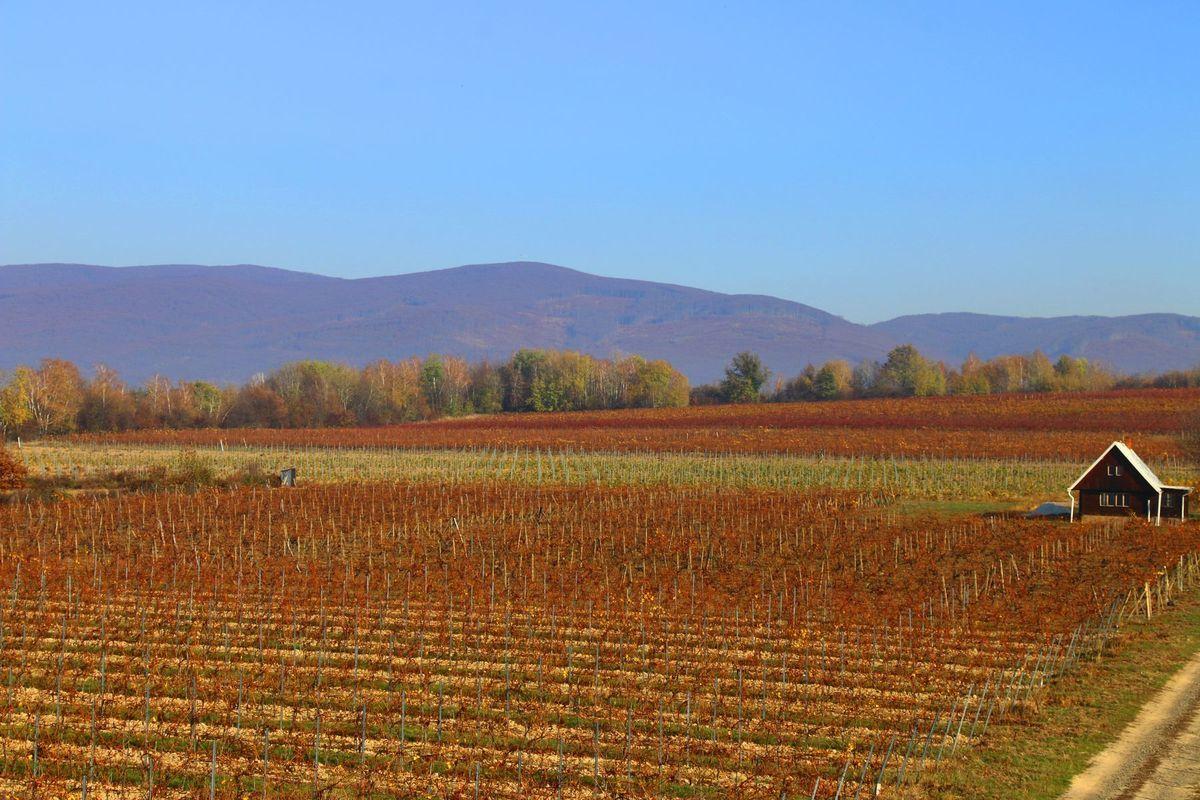 Vinicu v Orechovej chráni od severu veniec Vihorlatských vrchov.
