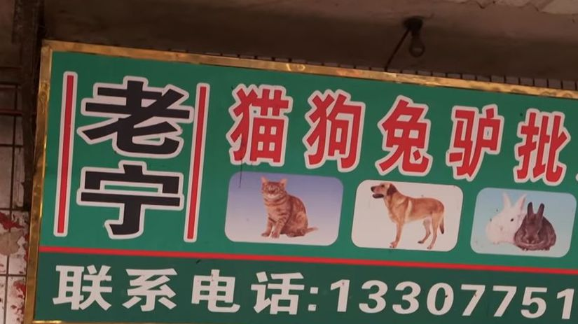 psie mäso, Jü-lin