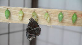 motýľ / Košice /