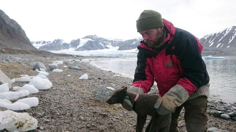 Nórsko Kanada líška polárna prechod vzdialenosť