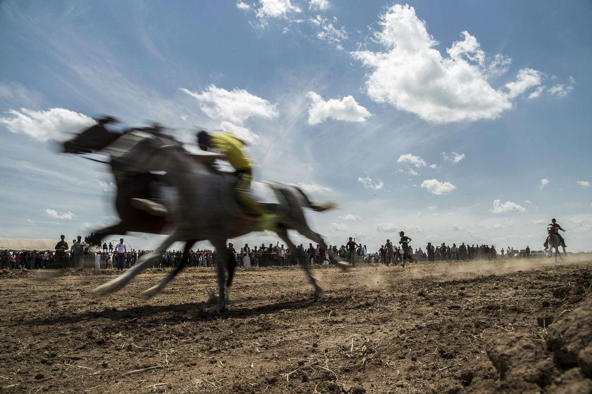Sýria, kôň, preteky,
