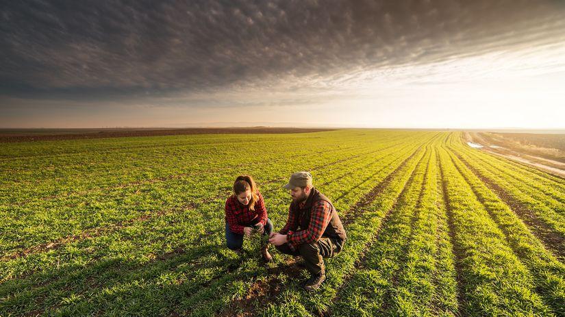 pozemok, pôda, poľnohospodárstvo, hospodárstvo,...