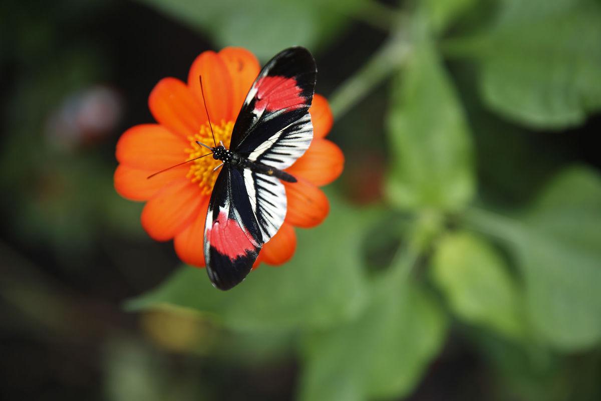 Florida, kvet, motýľ, leto,