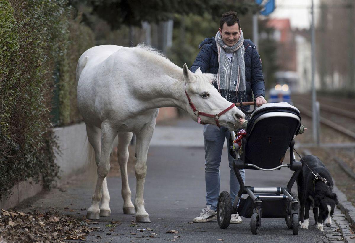 Nemecko Kobyla Majiteľ, kôň, kočík, dieťa, bábätko,