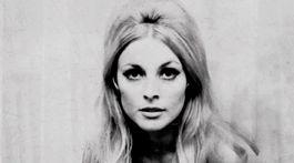 Herečka Sharon Tate na nedatovanej fotografii.