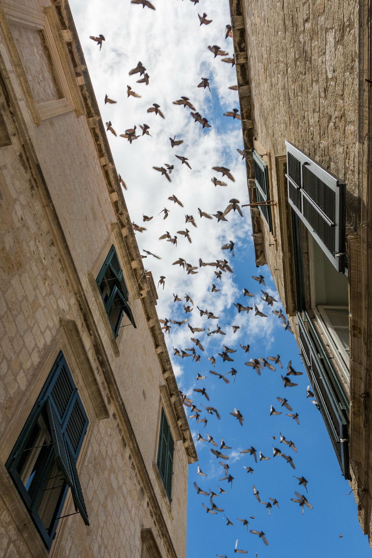 Dubrovnik, vtáky