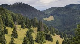 kopanecké lúky, les,