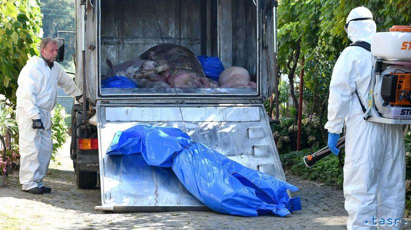 africký mor ošípaných, kafiléria