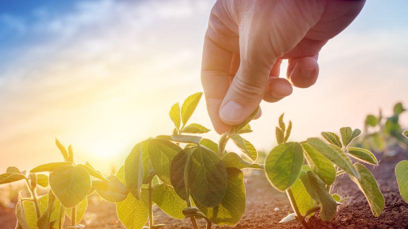 pole, hospodár, pestovanie, plodiny, rastliny,