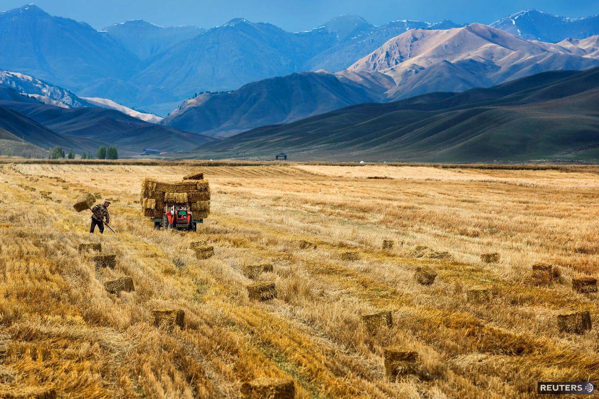 Čína, pole, hory, farmár, úroda