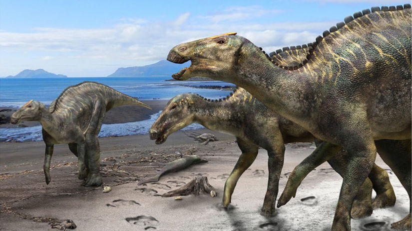 Fig1-Kamuysaurus-japonicus-1024x710