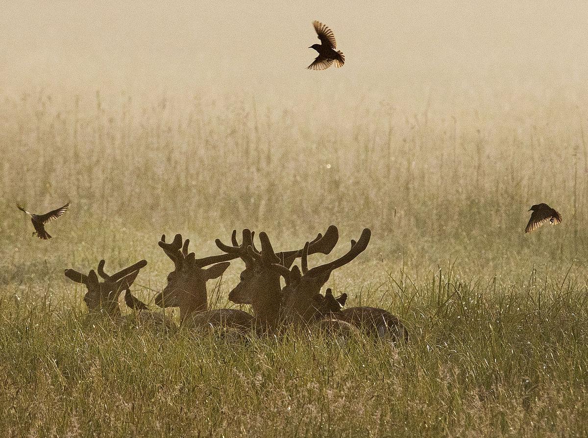losy, soby, jelene, vtáky