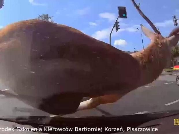 jelen na aute