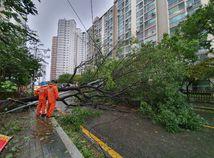 kórea, tapah, tajfún, strom zrútený, dážď
