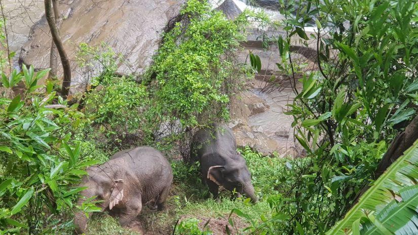 Thajsko / slony /