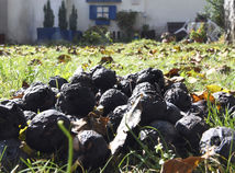Video: Od západu na východ. Čierne orechy sa nevyhli žiadnemu kútu Slovenska