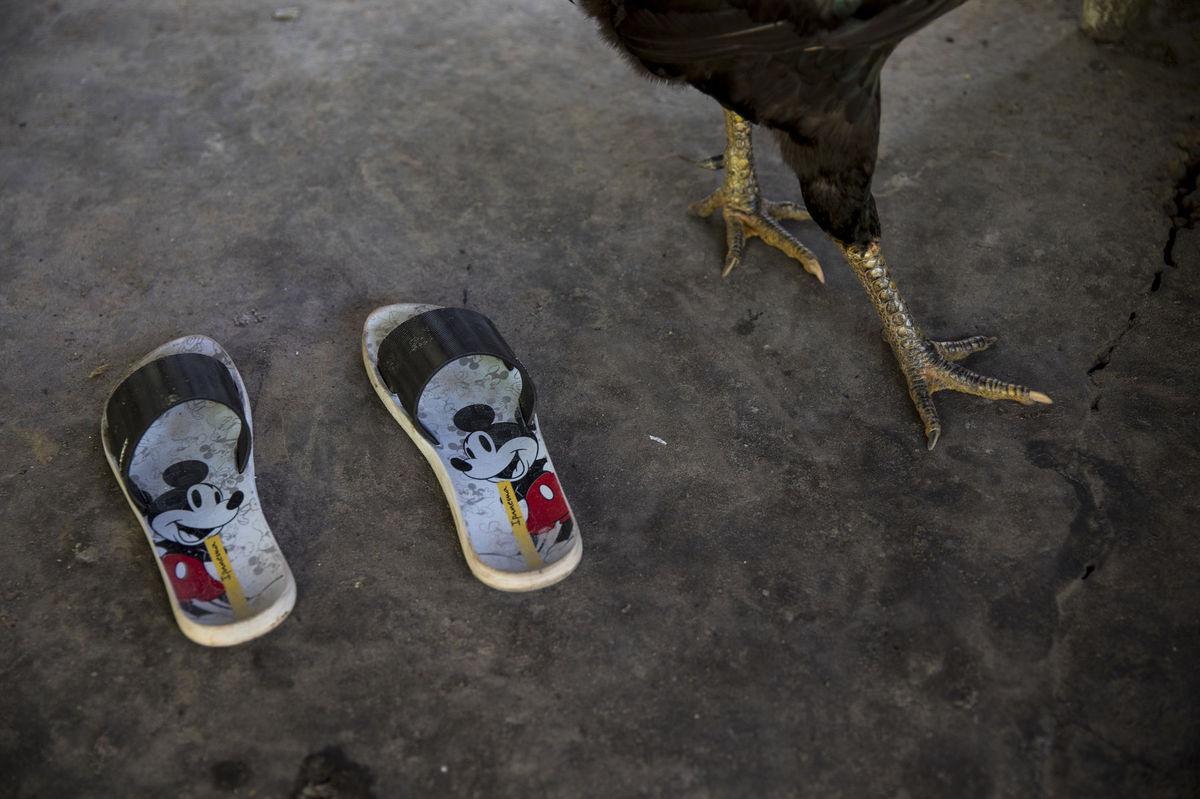 Brazília, papuče, kura, nohy, sliepka