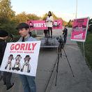 protest haščák dom gorila