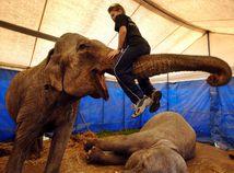 slon, cirkus