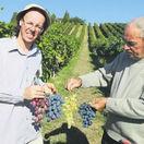 Korpás, víno, hrozno, vinič