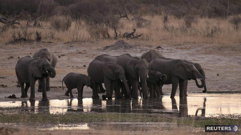 ZIMBABWE slony