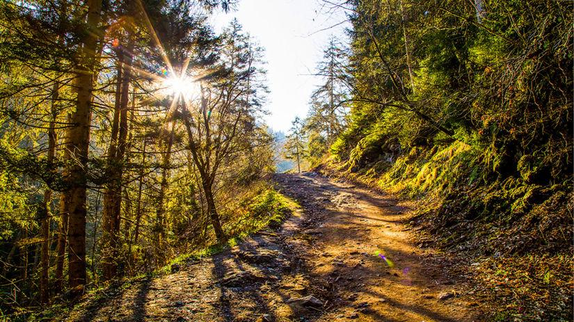 príroda, lesná cesta, stromy
