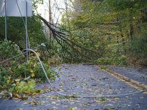 počasie, vietor, strom, USA