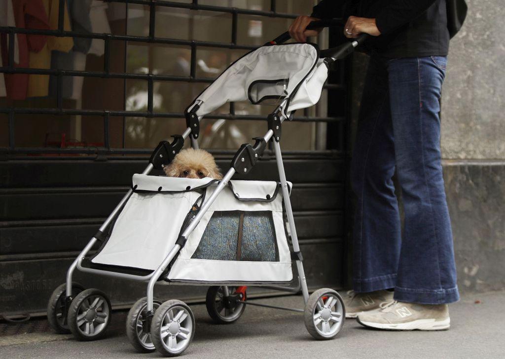 Taliansko, pes, vozík