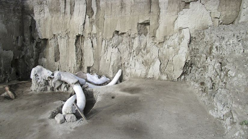 Mexico Mammoth Trap