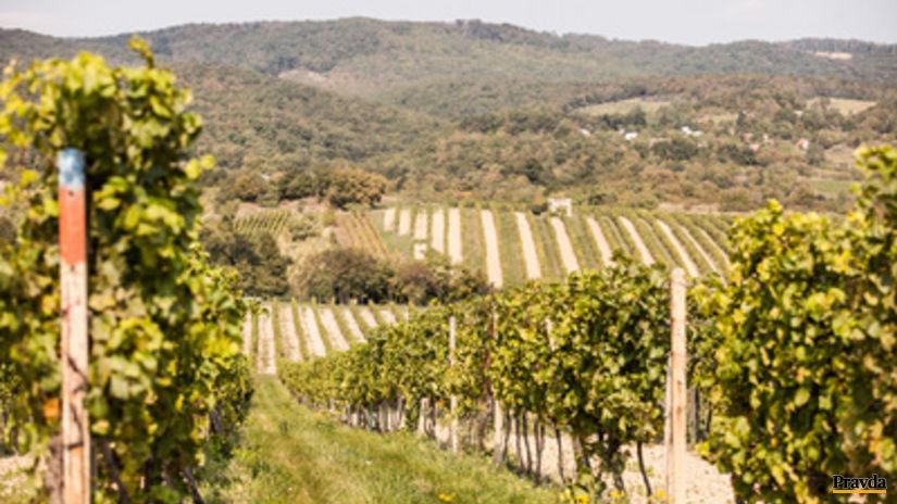 vinohrad 1