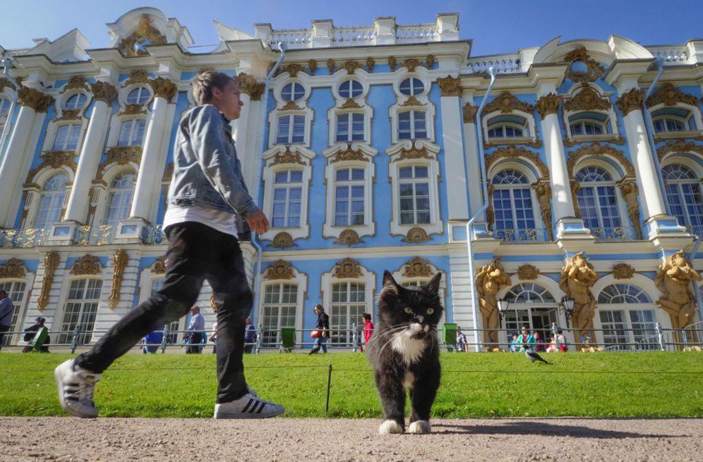 Rusko, Petrohrad, mačka